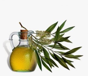 tea-tree-oil-1